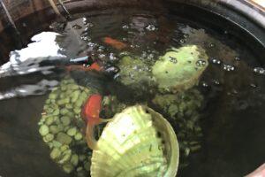 バンたび日記・2 金魚を飼っています。